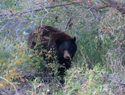 Unit 25 Bear