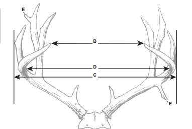 What makes a 160 inch Mule Deer? Basic field judging.