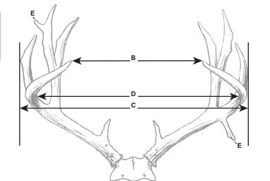 What makes a 160 inch Mule Deer? Basic field judging.