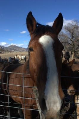 Flat Tops Wilderness Pack Horses