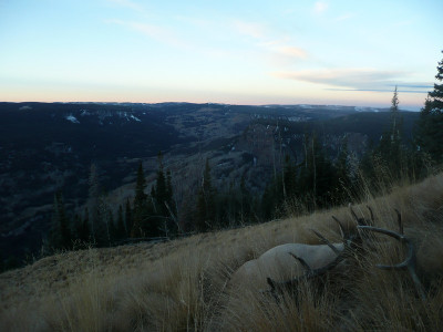 Flat Tops Wilderness Bull