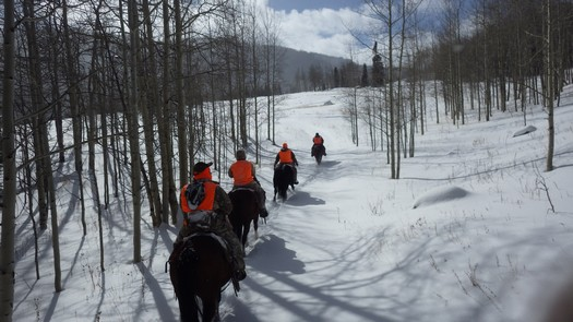 Elk Hunting in The Snow