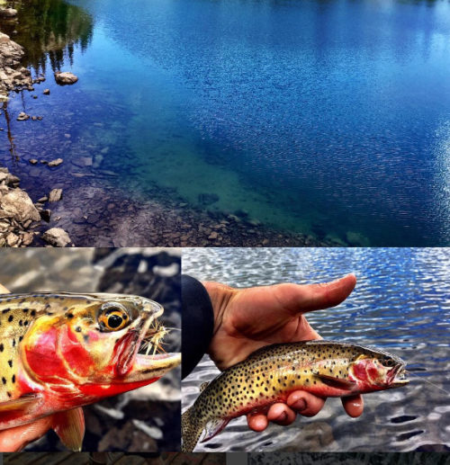 Cliff Gray Flat Tops Wilderness Area Fishing